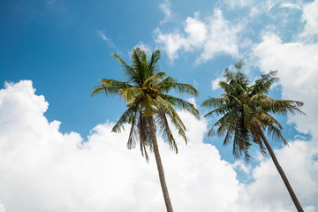 Coconut palm trees in sunny day with blue sky - Tropical summer breeze holiday