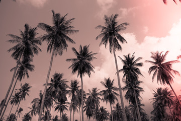 Coconut palm trees - Tropical summer breeze holiday, Light leak effect