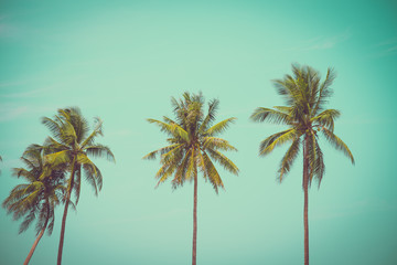 Coconut palm trees in sunny day - Tropical summer breeze holiday, vintage tone