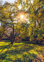 Autumn landscape tree with golden leaves in autumn and sunrays. Beautiful landscape with magic autumn trees and fallen leaves