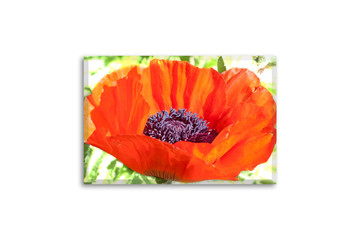 Floral motif canvas. Beautiful red poppy flower. Wall art photography, interior decoration mockup