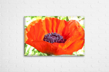 Floral motif canvas on white bricks wall. Beautiful red poppy flower. Wall art photography, interior decoration mockup