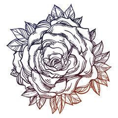 Vintage floral detailed hand drawn rose, leaves.