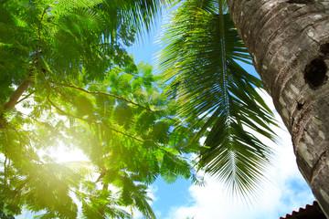 Sunlight in the caribbean garden.