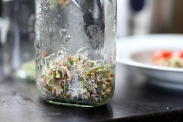Sprossen aus dem Glas