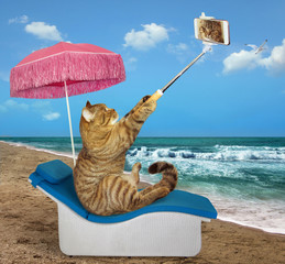 The cat sits in a beach chair and makes a selfie.