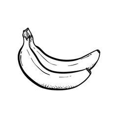 2 Bananas Detailed Hand drawn Vector Illustration Line Art Drawing