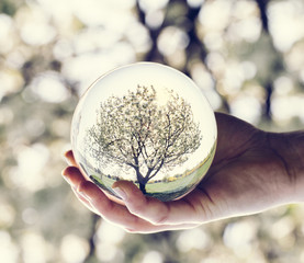 A tree reflection in a glass ball held by a woman.