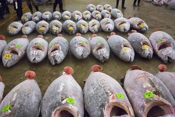 Tuna at the Tsukiji Fish Market in Tokyo, Japan