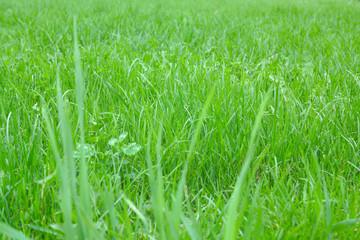 green grass, football field