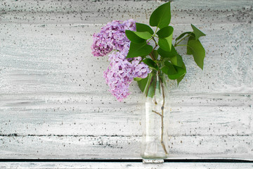 a branch of lilac in a transparent vase on a white background