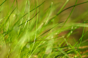 Forest young green grass background.