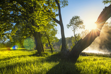 Perfect summer landscape on green nature with sun backlight through tree trunk on clear warm day. Green trees on river bank with fog over surface of water. Clean sunny day on outdoor nature.