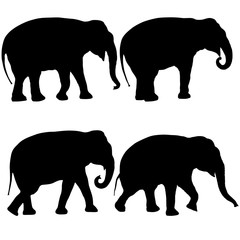 Set Silhouette large African elephant on a white background