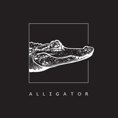 American alligator (Alligator mississippiensis) - vector image.