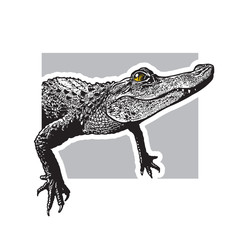 Portrait of young American alligator - vector graphic illustration.