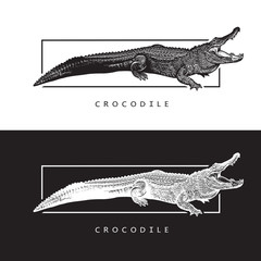 Vector graphic image of American alligator.