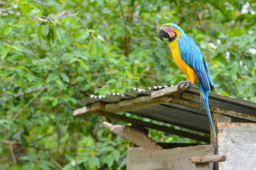 Closeup of a blue-and-yellow macaw