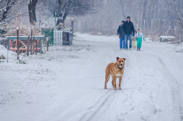 free yellow dog in the snow