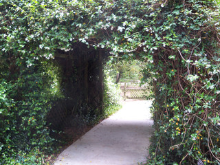 Walkway covered with white Confederate Jasmine flowers