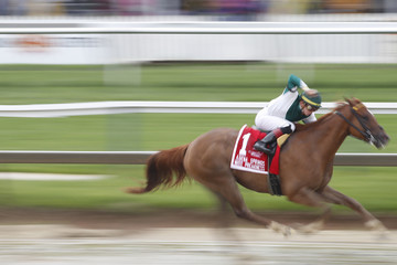 Horse Racing: Black-Eyed Susan
