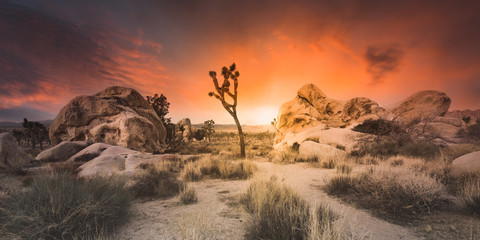 Photo Stands Deep brown Desert Sunset - Joshua Tree Boulders - Wide Angle Panoramic