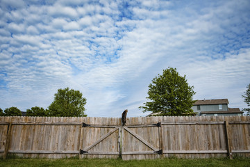 Low angle view of cat climbing on fence against cloudy sky