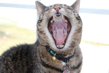 Big Yawn