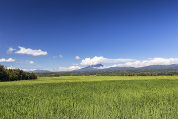 Varying shades of green rice fields with Ebulobo volcano in the distance in Flores, Indonesia.