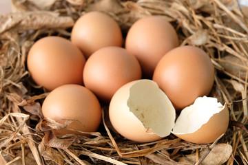 Broken eggs on dry grass