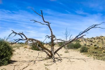 Desert Landscape with Cactus and Desert Plants