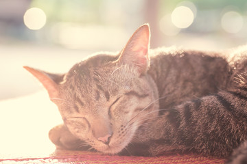 Cute cat sleeping on the mat, pet at home