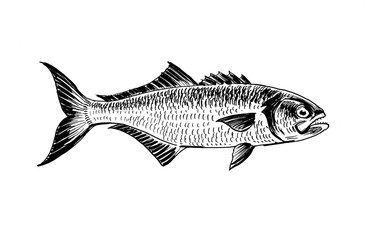 Ink black and white drawing of a fish