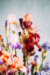 iris flowers in the vase