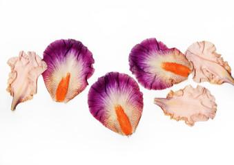 iris petals isolated