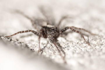 Portrait of a spider on a concrete wall