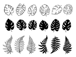 Vector illustration of fern and monstera leaves