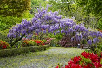 봄꽃이 활짝 핀 4월의 봄