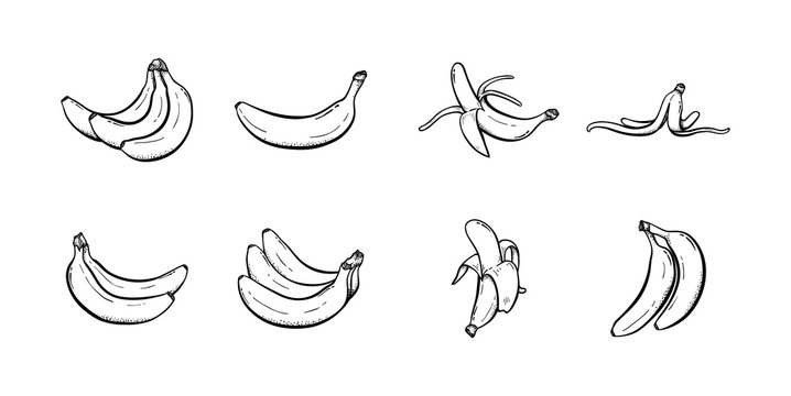 Set of banana hand drawn illustration vector sketch collection line art icon