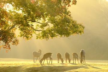 金色の奈良公園と鹿 #2