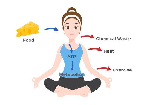 human body metabolism infographic / vector