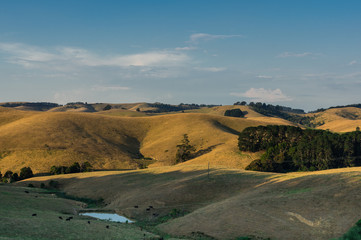 Green rolling hills of South Gippsland in Victoria, Australia.
