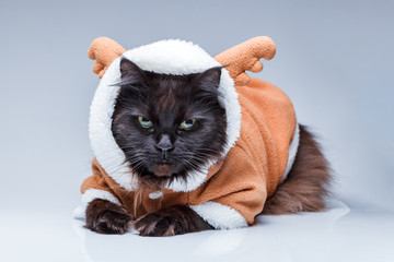 Photo of black cat in deer suit