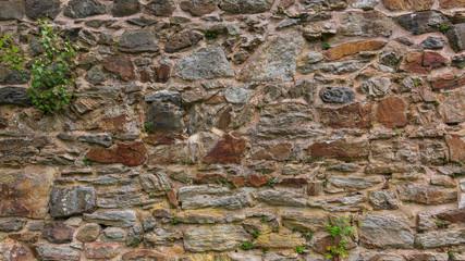 Mauer aus Naturstein mit Moosen und Flechten in einem Klostergarten