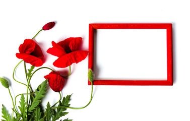 Poppy flowers and red wooden frame on white