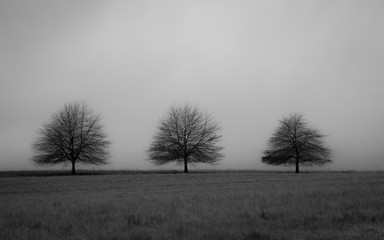 Black and white picture of trees with copy space background