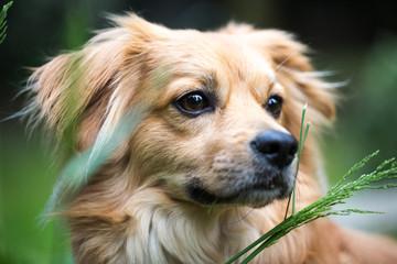 Hund Beobachtet alles