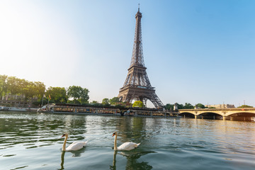 Eiffel tower, Paris in France with swans at the seine river