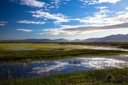 Clouds reflected at dawn in the marsh at Alamosa National Wildlife Refuge in southern Colorado, with the Sangre de Cristo range of the Rocky Mountains in the background