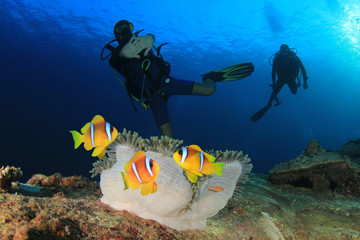 Scuba diving with fish. Scuba divers and clownfish